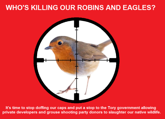 robins killing